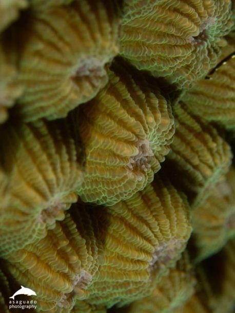 hard corals sps large sps small small polyp large polyp stony hard ...
