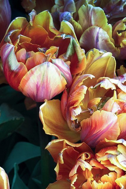 """Color scheme for this room: Teal, fuschia, pink, orange. franboise: """" Parrot Tulips """""""
