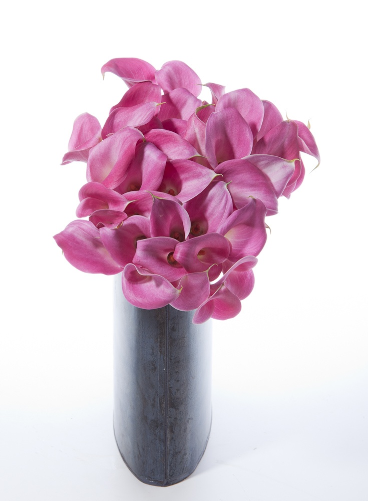 21 best Calla Lilies images on Pinterest | Wedding bouquets ...
