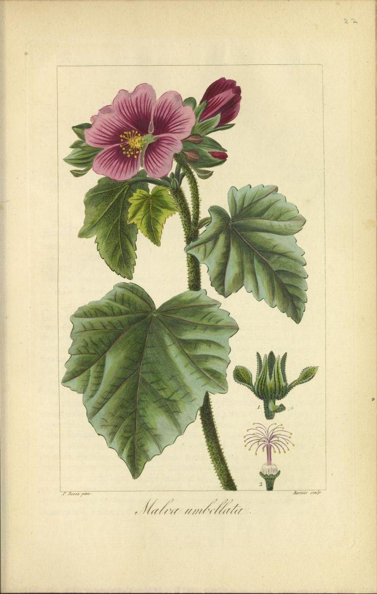 Herbier général de l'amateur : contenant la d...