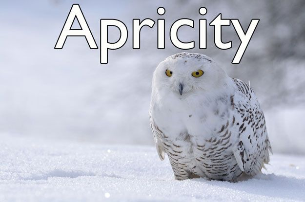 APRICITY - Meaning: The sun's warmth on a cold winter's day.Origin: 1620sAs in: Even in darkest December you sometimes get a moment of beautiful apricity.