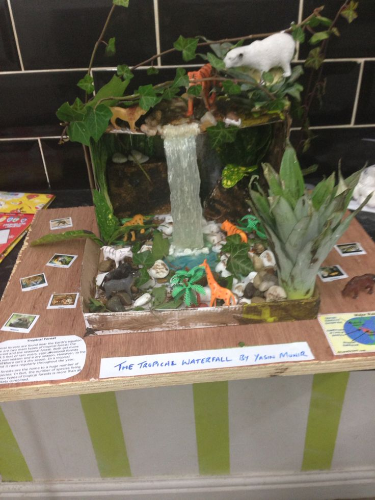 Model tropical rainforest!