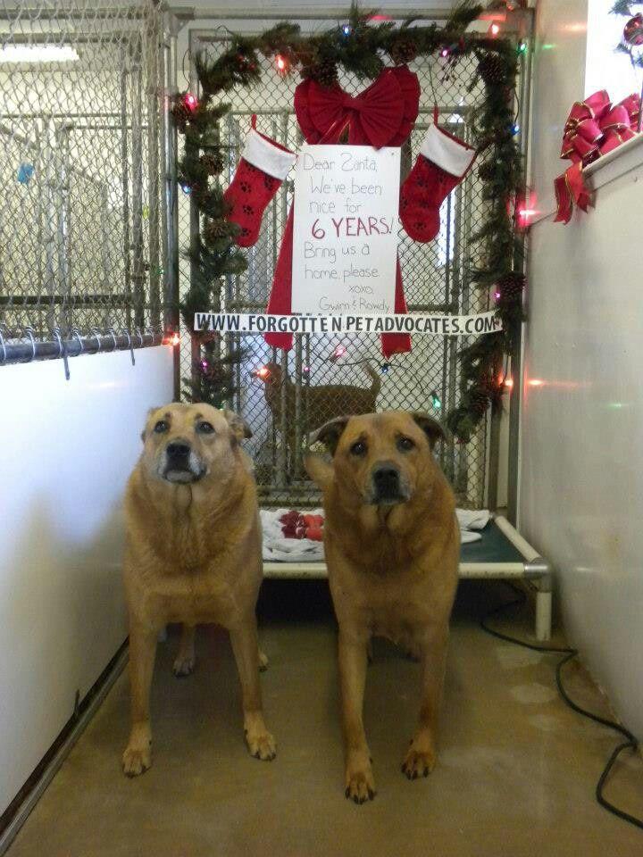 7 years in Shelter! PLZ ADOPT! Adoption, Dogs, Dog adoption