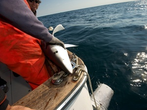 npr- under the label: sustainable seafood.