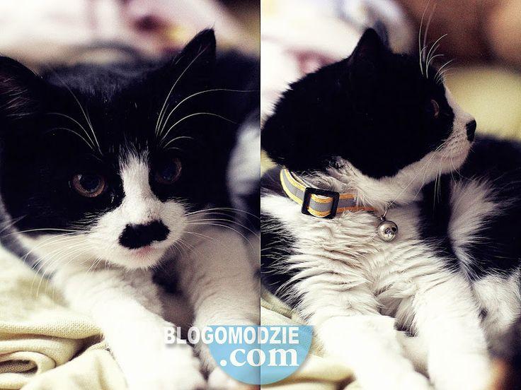 Adolf Cat