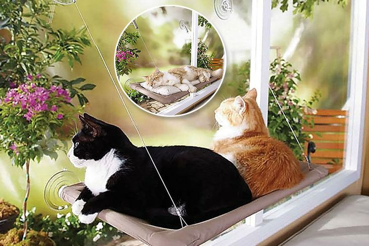 Wall-Mounted Sunshine Cat Bed