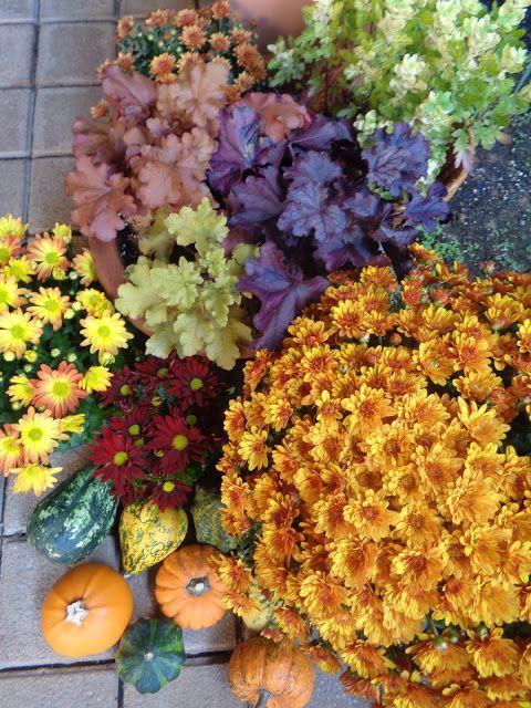 I colori dell'autunno all'entrata di casa https://lefotodiluisella.blogspot.it/2017/10/ingresso-dautunno.html