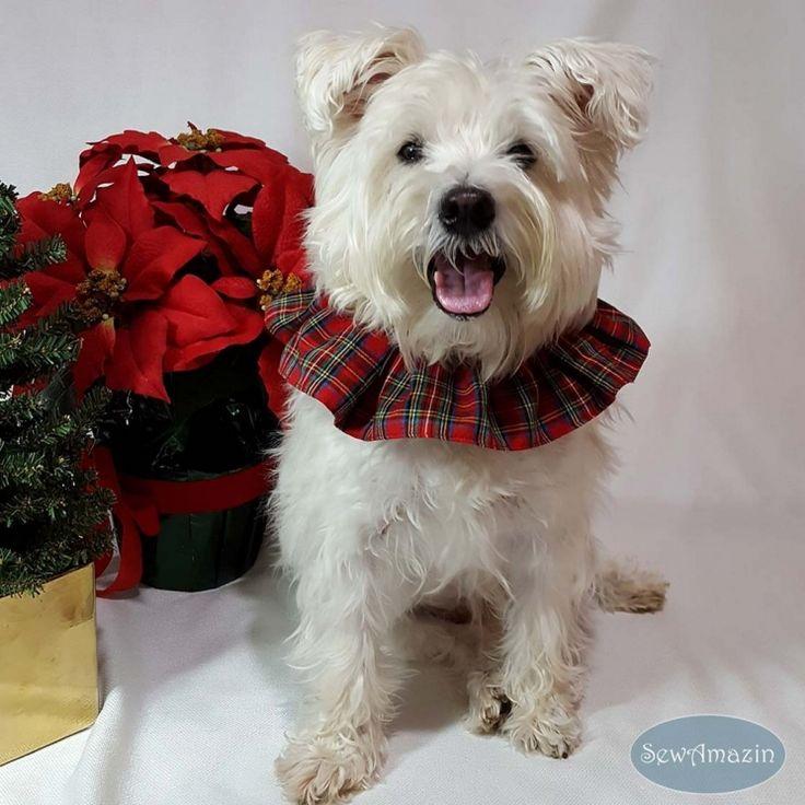 Red Royal Stewart Tartan Plaid Dog Scrunchie Neck Ruffle | SewAmazin