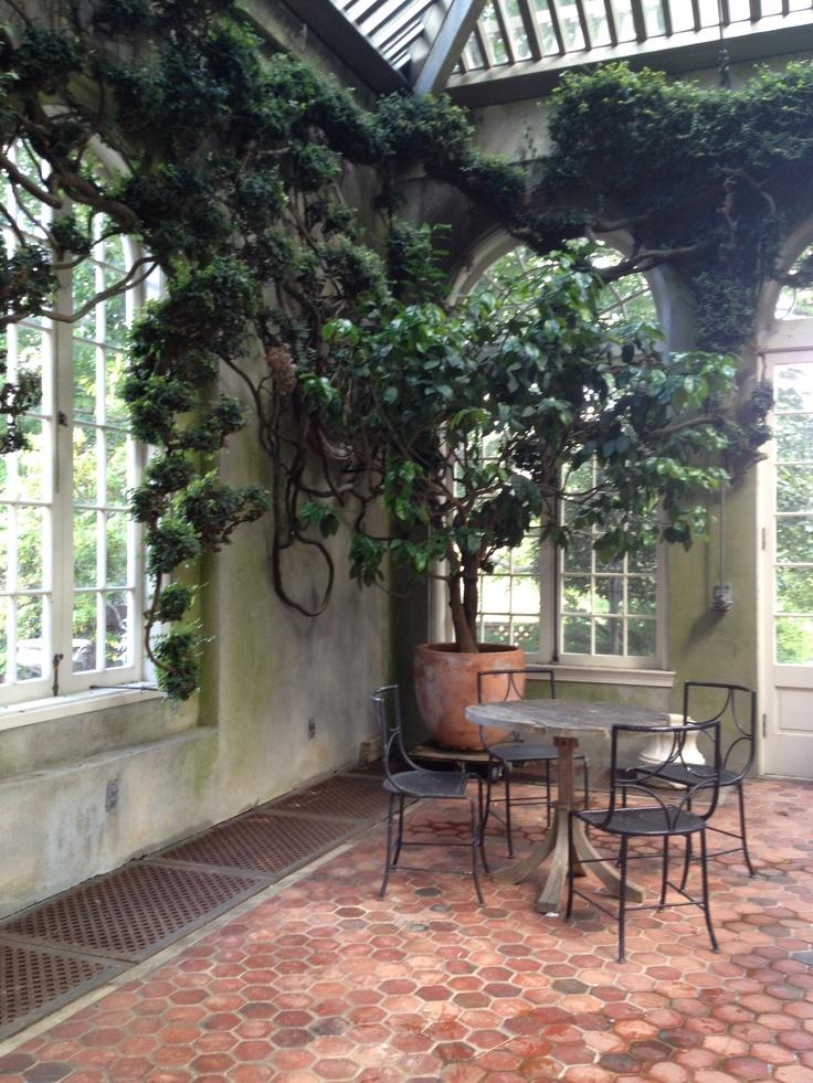 Washington Dc Popout Map%0A Ancient Fig Ivy in the Orangerie at Dumbarton Oaks Gardens  Washington DC