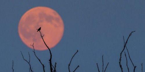 La Luna estará lo más cercana de la Tierra en 69 años...