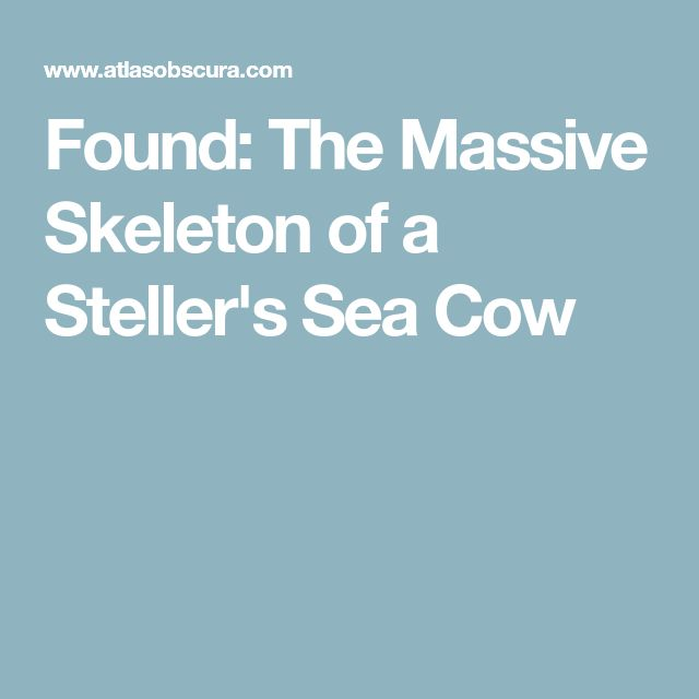 Found: The Massive Skeleton of a Steller's Sea Cow