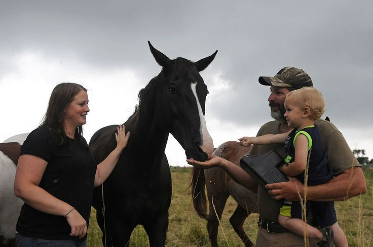 Horses to help heal PTSD victims