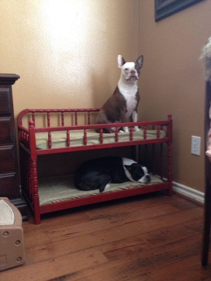 Dog bunk bed recycled from a baby changing table.
