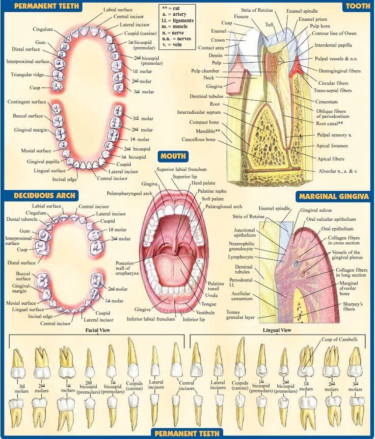 10 best Instruments images on Pinterest | Dental, Dental hygienist ...