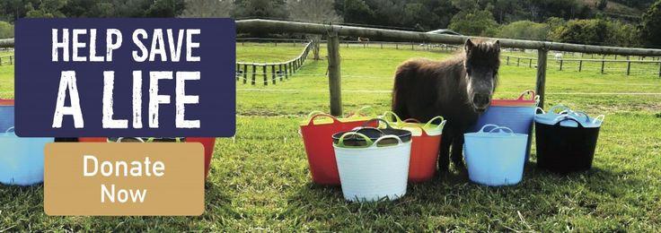 Save A Horse Australia – Donate