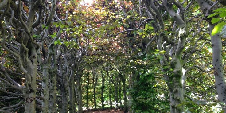 HELT VÆK I EN HÆK - behind the hedges