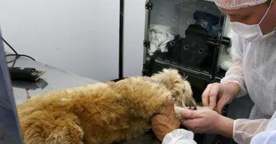 Com uma sacada super bacana, o vídeo assinado porDM9DDB para a Ampara Animal faz parte da campanha Carne da Cachorro, que ao mesmo tempo que incentiva a a - Ampara Animal lança companha que incentiva a adoção e fala sobre o preconceito aos chineses