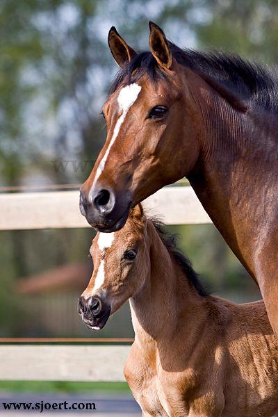 Horses / Sjoert.com