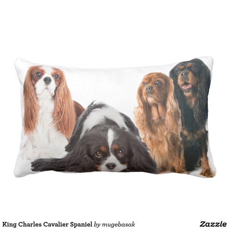 102 best Cavalier King Charles Spaniel images on Pinterest