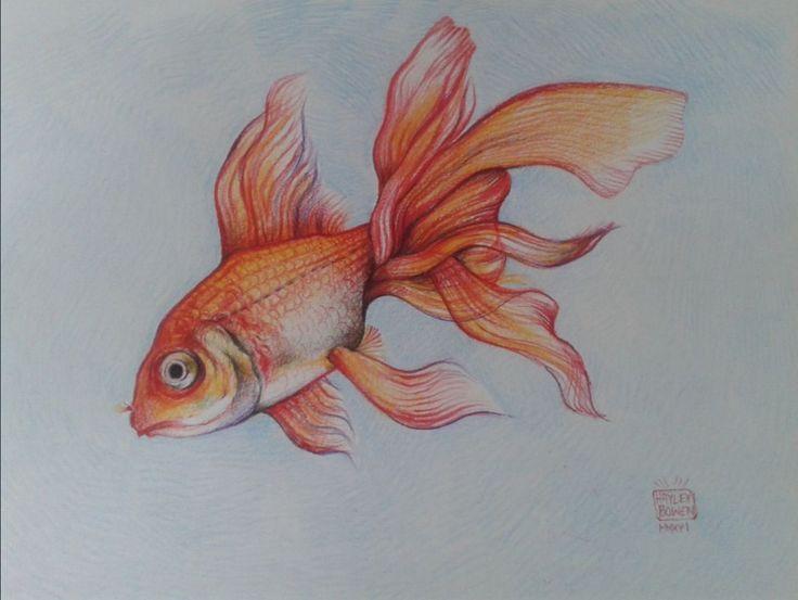 Hayley Bowen - Goldfish in coloured pencil
