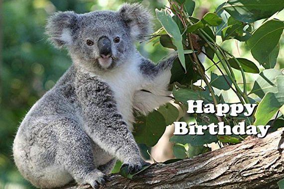 Birthday Card Koala Printable Digital Photo Card