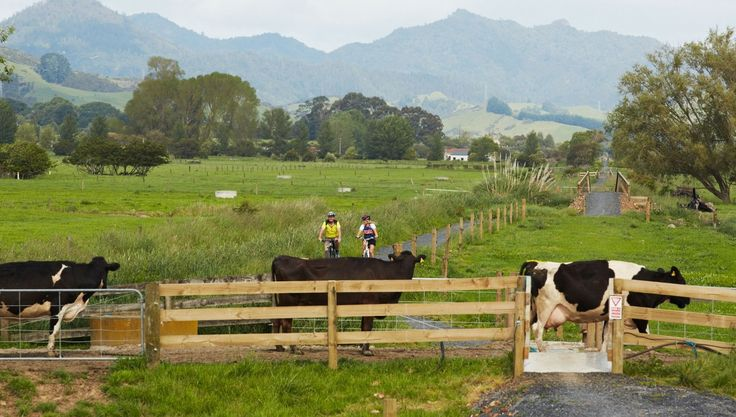 Hauraki Rail Trail - Close Proximity to Hamilton, Auckland & Tauranga
