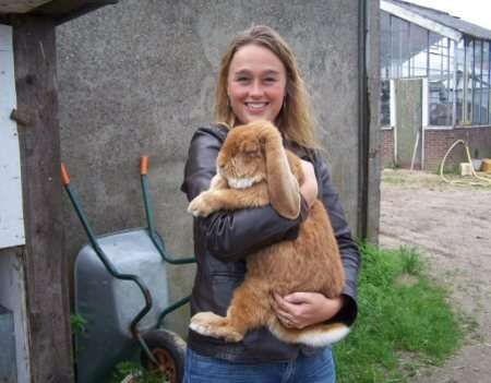 French lop.. Broccoli should get about this size.  What was I thinking?