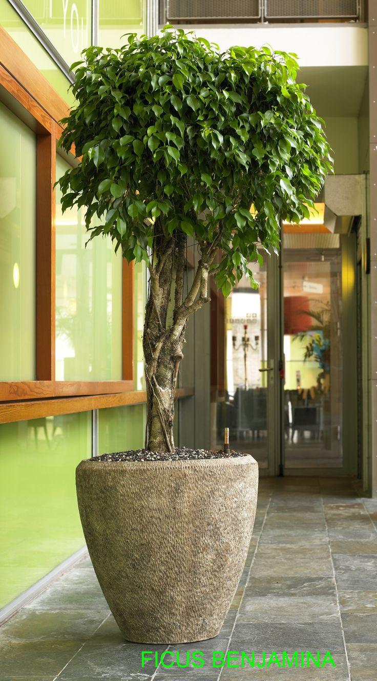 Best 11 Plantes d\'appartement images on Pinterest | Apartments ...