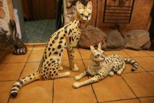 Metal animals - koty z metalu
