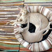 #dogalize Cucce per gatti, come scegliere quella ideale #dogs #cats #pets