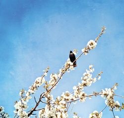 Summer, spring background | Shutterstock