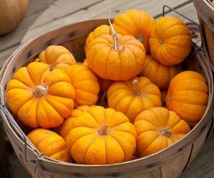 17 Best Images About Pumpkin Beauty Recipes On Pinterest Homemade Pumpkins And Milk Bath