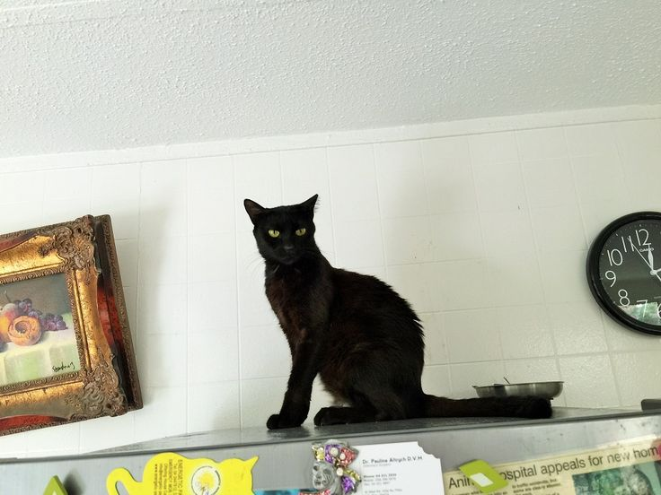 中東の猫たちの間で話題騒然の新連載「きょうもアラブで猫まみれ」。第四回のテーマは「料理は戦いだ!」です。   ア・・・