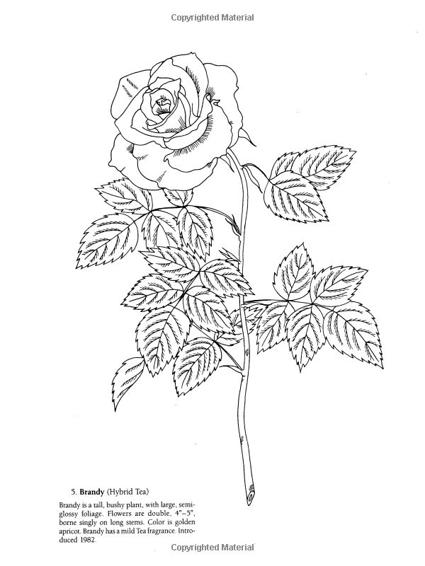 Favorite Roses Coloring Book: Ilil Arbel: 9780486258454: Books - Amazon.ca