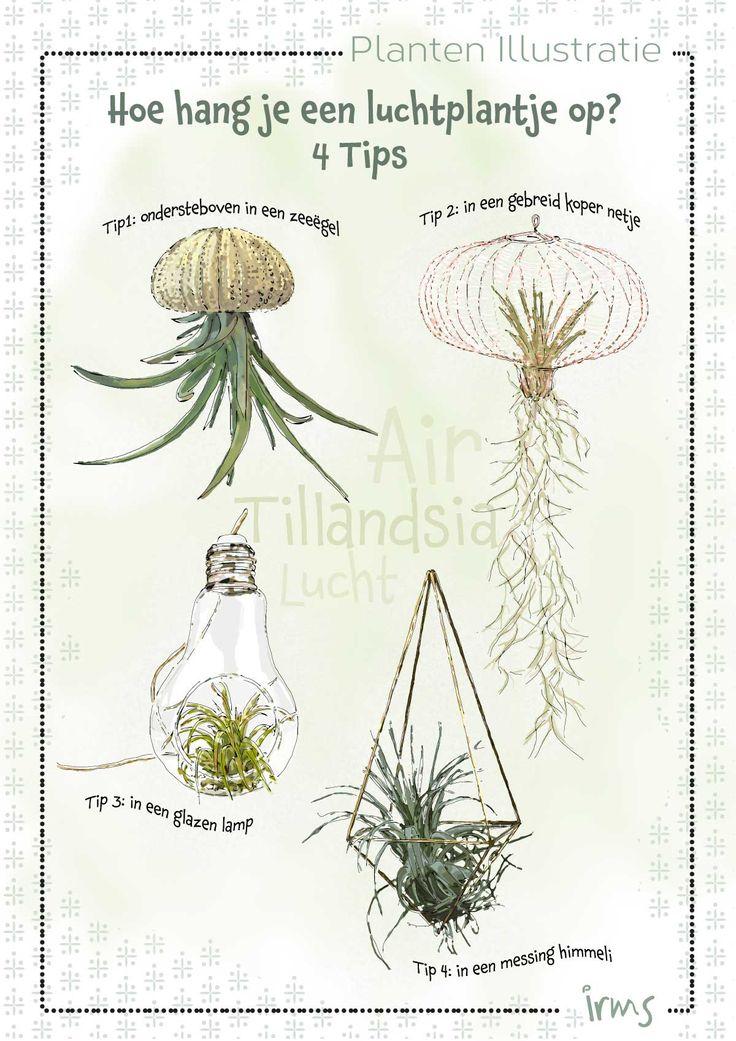Luchtplantjes ophangen, geïllustreerde poster met 4 tips geïllustreerd door irms. Wil jij ook jouw verhaal of producten geïllustreerd hebben? Neem contact op: www.irmsblog.nl