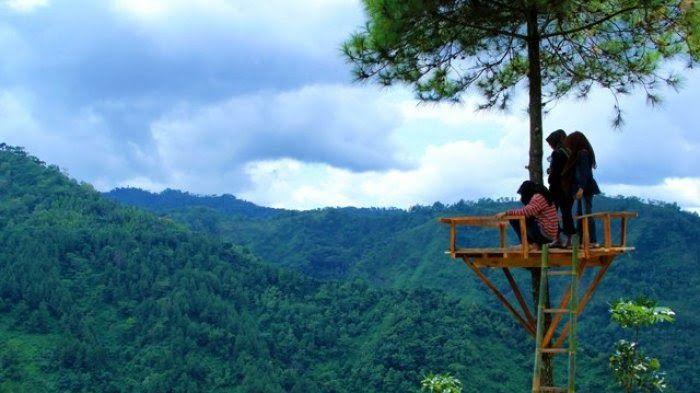 Gambar Pemandangan Gunung Dan Sawah Lukisan Pemandangan Fotografi Alam Foto Alam