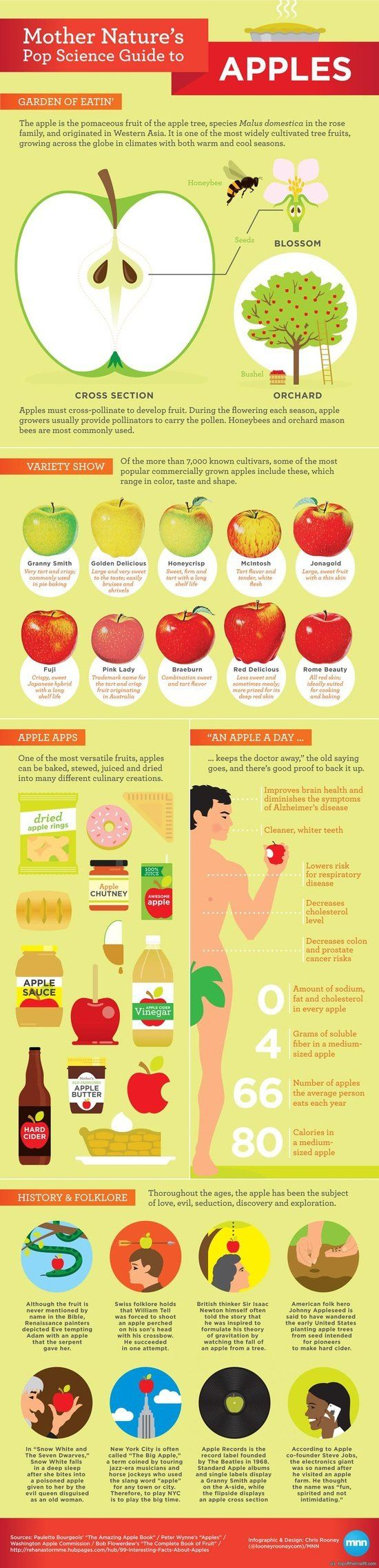 Apples are an excellent snack for curbing appetite