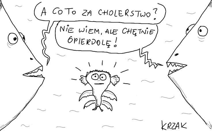 #ryby