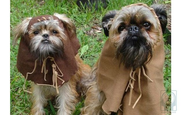 This perfect pair of Ewoks. | 22 Dogs Who Totally Nailed The Geeky Halloween Costumes