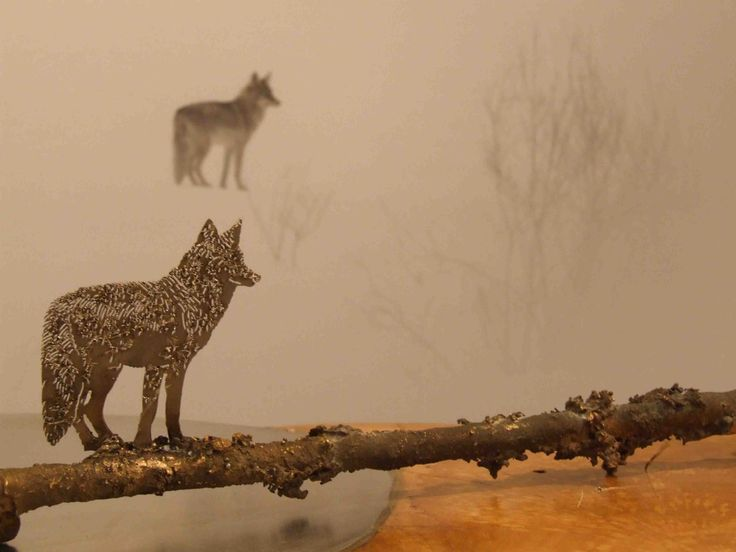 COYOTE  Photography by Vincent Munier and Sculpture by Paolo Albertelli, Mariagrazia Abbaldo - Studio C&C