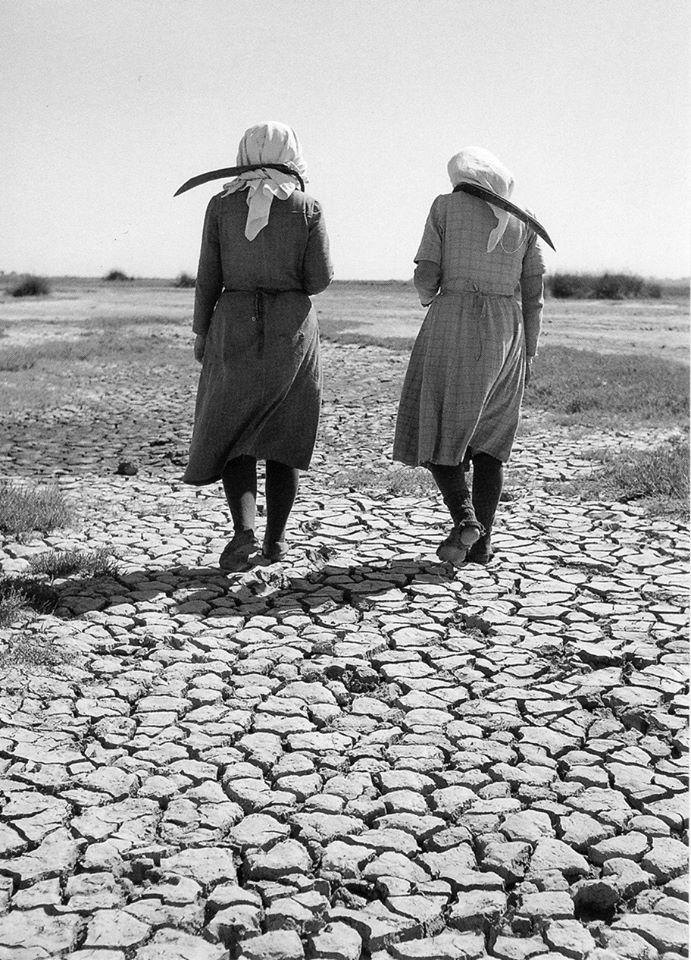 Χρυσούπολη, 1950, φωτογράφος Δημήτρης Χαρισιάδης,