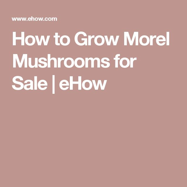 How to Grow Morel Mushrooms for Sale | eHow
