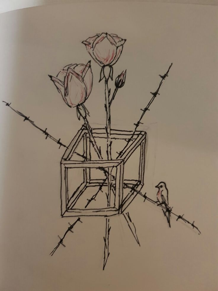 Roses, wire and a robin redbrest in a box.