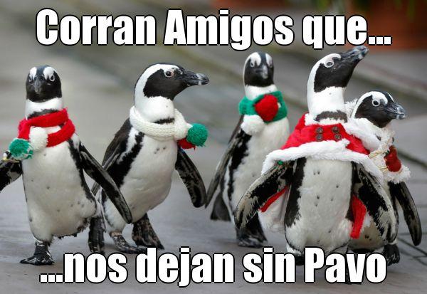 ¡Corran #Amigos que nos dejan sin #Pavo! @candidman #Humor #Memes #Pinguinos #Navidad