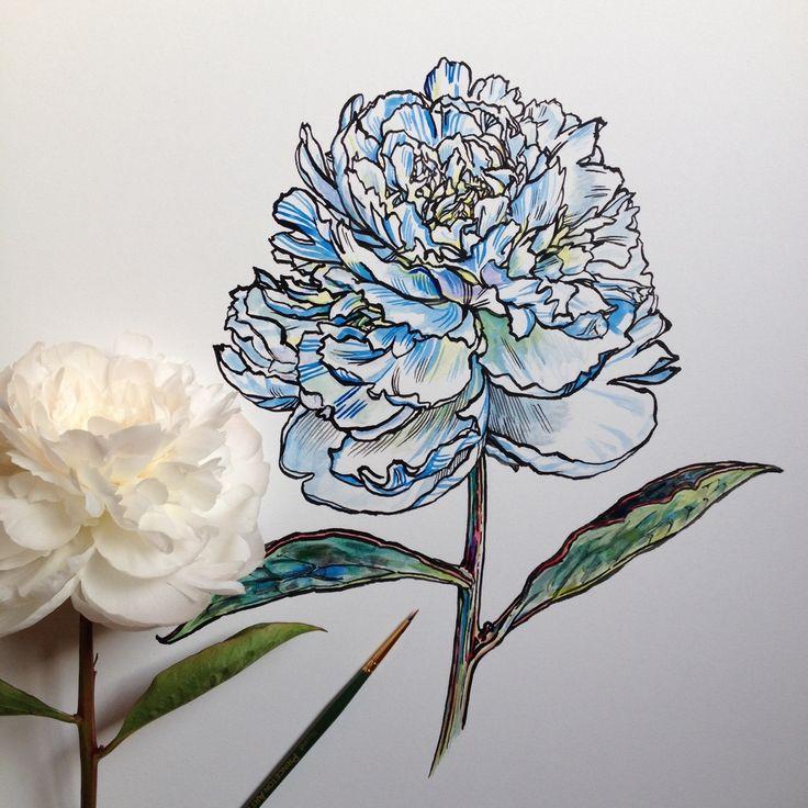India ink peony by Noel Badges Pugh