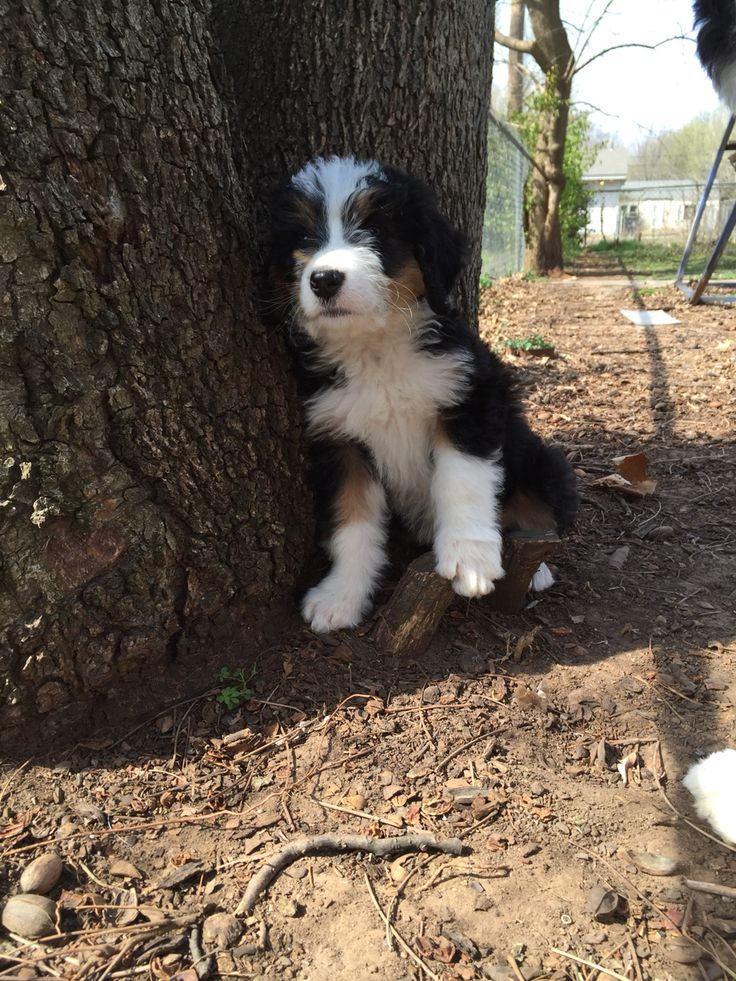 The 25 Best Non Shedding Dogs Ideas On Pinterest Non