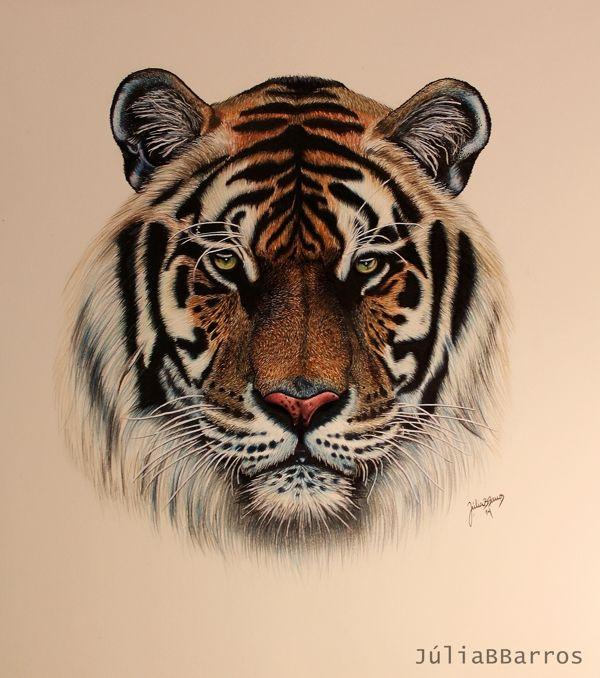 Tiger Drawing by Julia Barros
