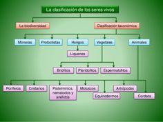 Biología PAU. Ecología. La clasificación de los seres vivos. ESP
