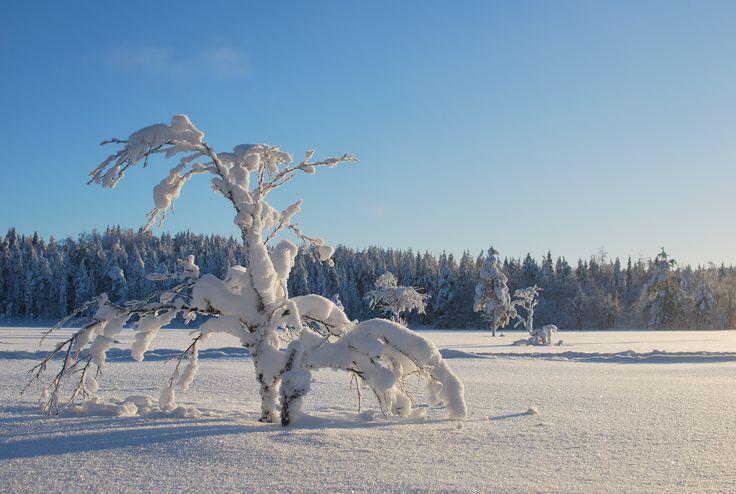Pristine, Syöte - Finland