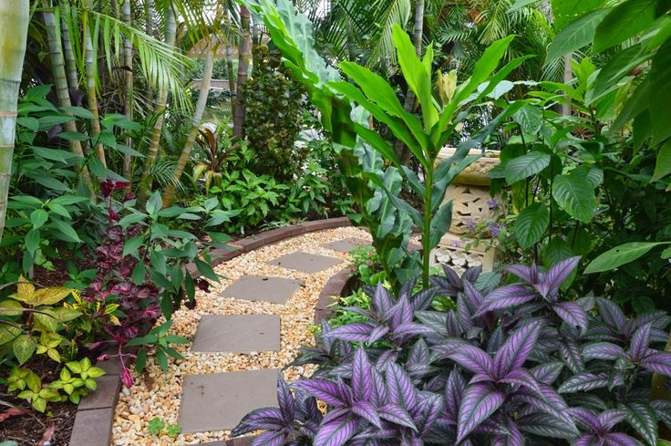 Plumeria 'Kasey Jordan'  and P. 'Bush Rainbow'  in the front garden. Below them is Hibiscus 'Patricia Noble'  and Galphimia gracilis  wit...